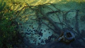 Pařez v jezeře