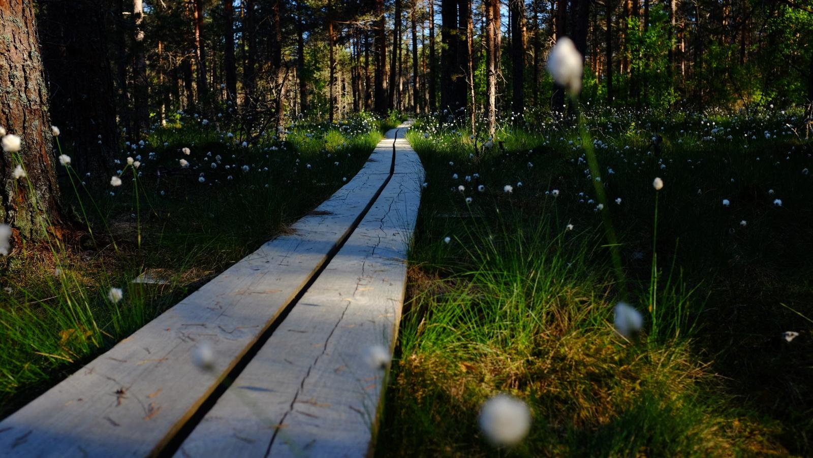 oandu ikla estonia